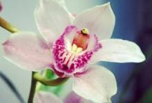 """""""Orchidea"""""""