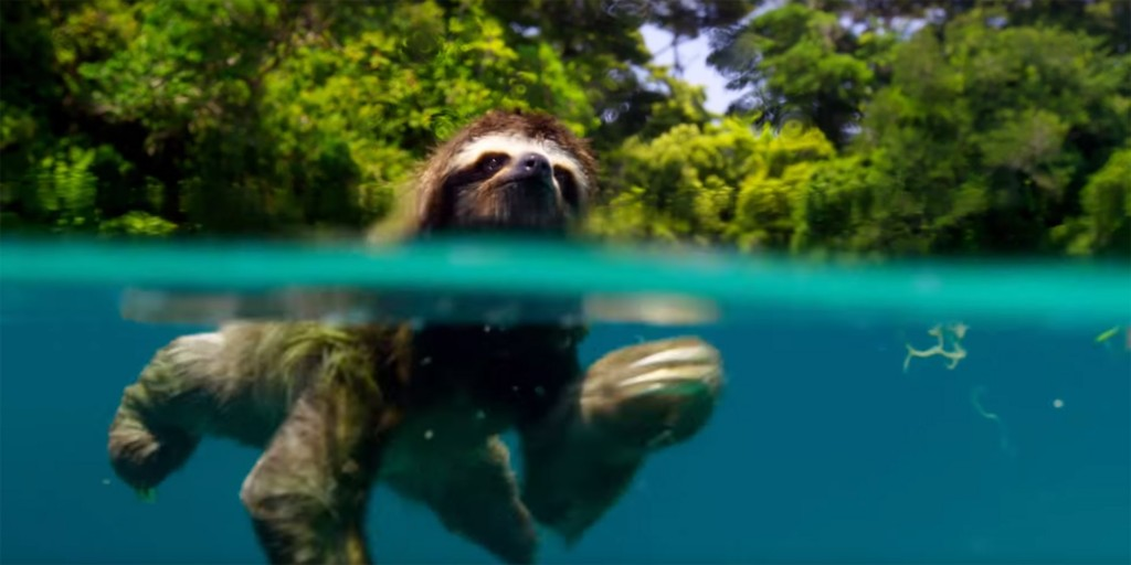 planet-earth-trailer-sloth-1476203907