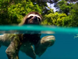 planet-earth-trailer-sloth-1476203907
