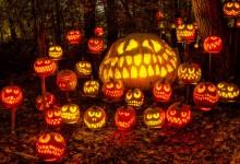 Halloween, Jack o'Lantern sboccia a Pavia