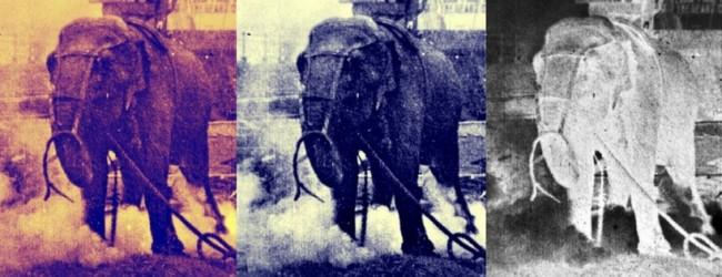 I 3 elefanti che hanno cambiato il Cinema