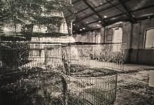 Urbex Rewind: le sfumature di silenzio di Marcella Milani