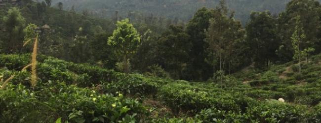Interviste AIESEC – lo Sri Lanka di Duccio Maria Dacco'