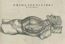 Il corpo umano tra sacralità e curiosità scientifica dall'antica Grecia al Museo Anatomico di Pavia