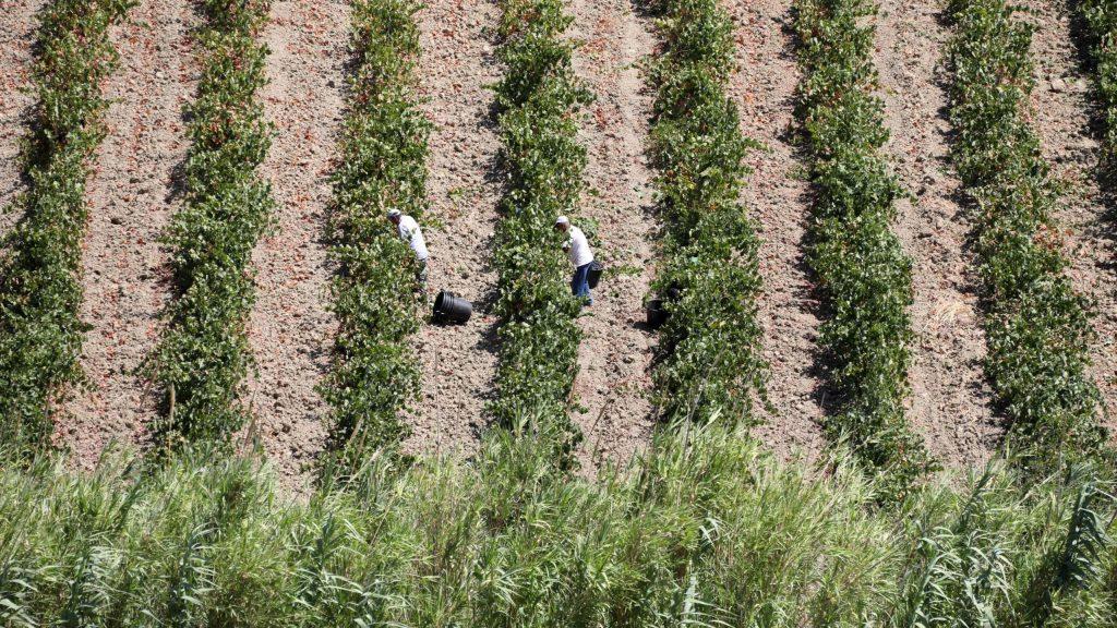 immigrazione-italia-covid-pericolo