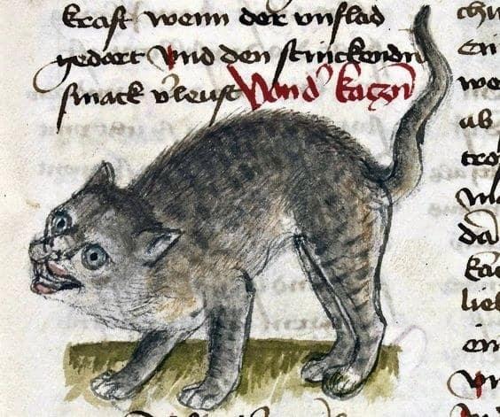 gatto_medioevo_arte_gattobrutto