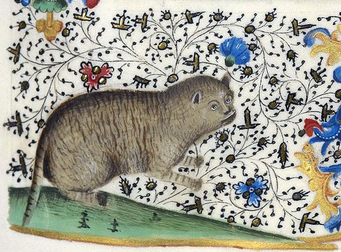 gatto_miniatura_medievale