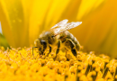 "Giornata delle api: ""Bee informed"""